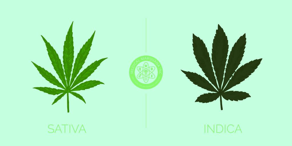 sativa vs indica weed