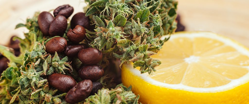 terpenes give marijuana scents and flavors