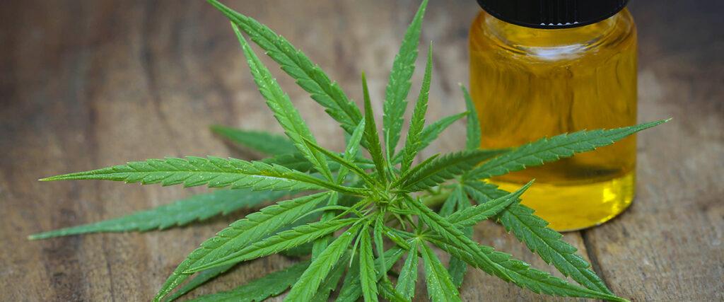 medical marijuana north dakota