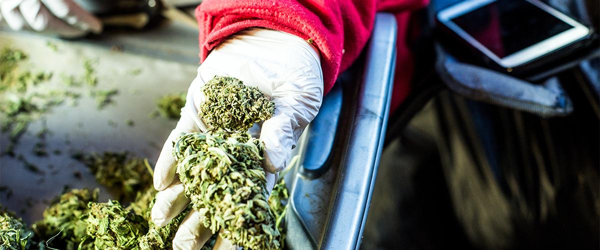 buying marijuana