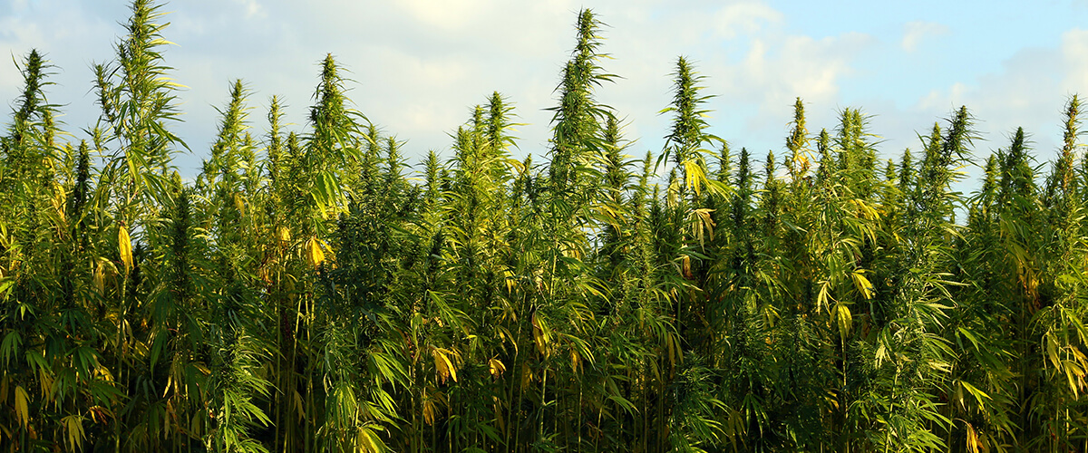 hemp legal in illinois