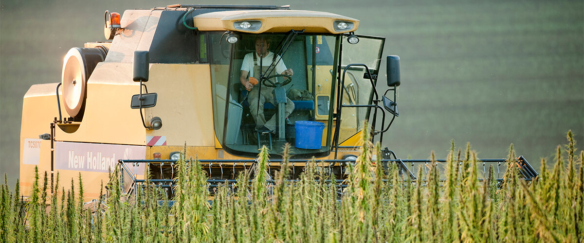 hemp legal farm bill