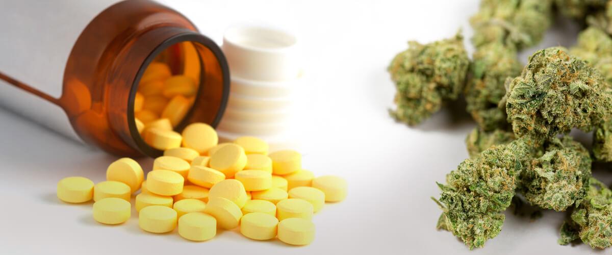 marijuana or opioids illinois