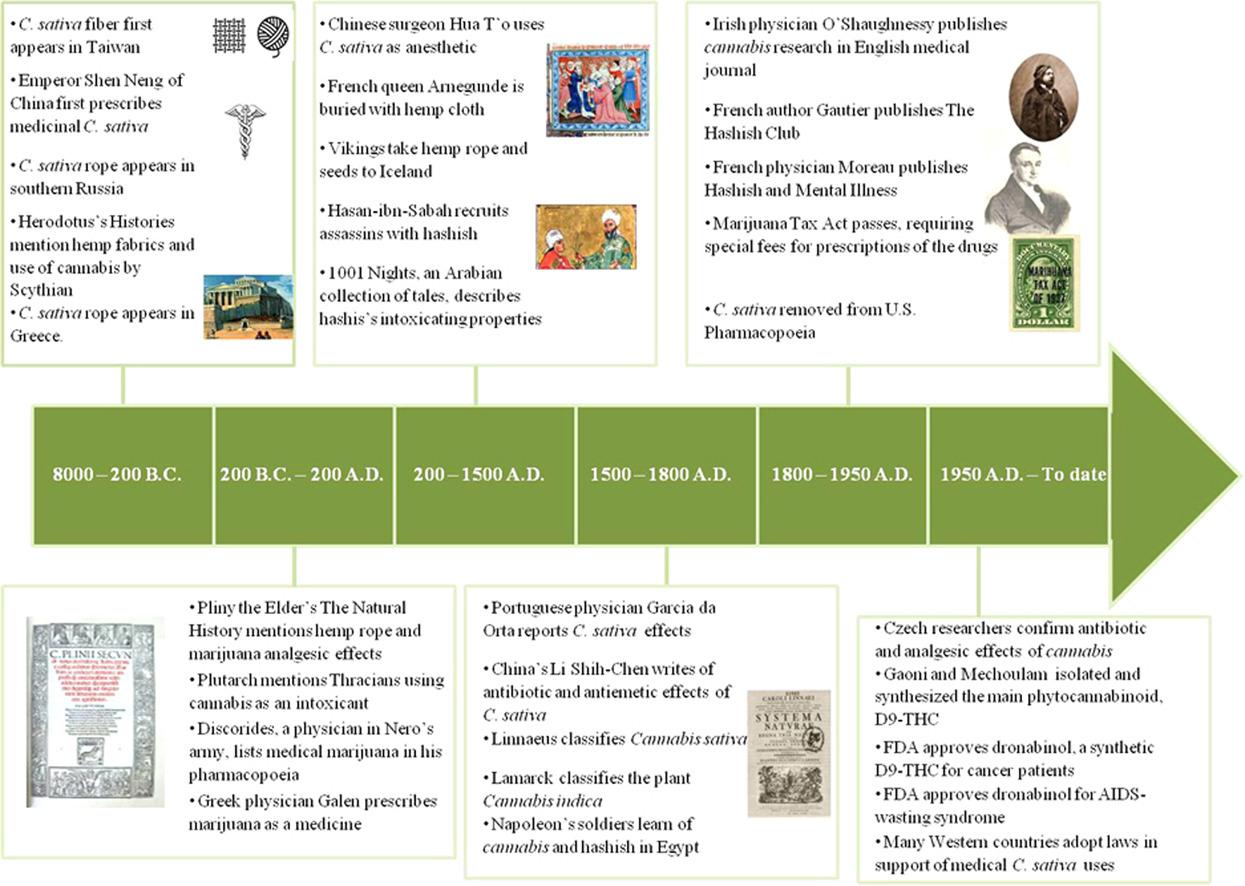 study marijuana history