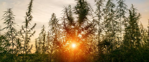 cannabis first started