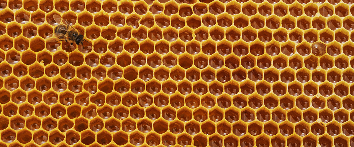 hemp good for bees