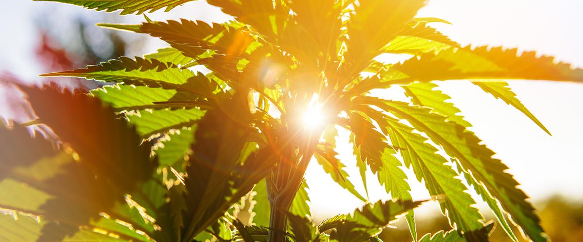 Hemp Legalization