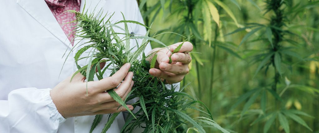 where did cannabis originate