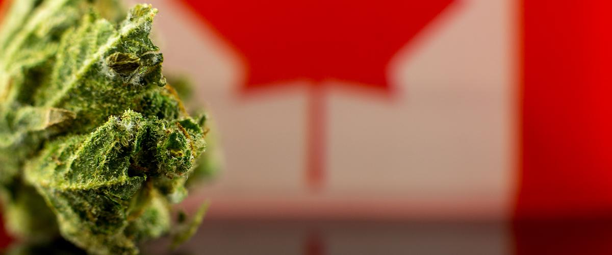 Canada Marijuana Sales