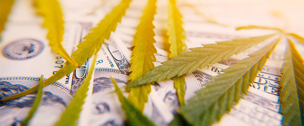 Marijuana industry projections
