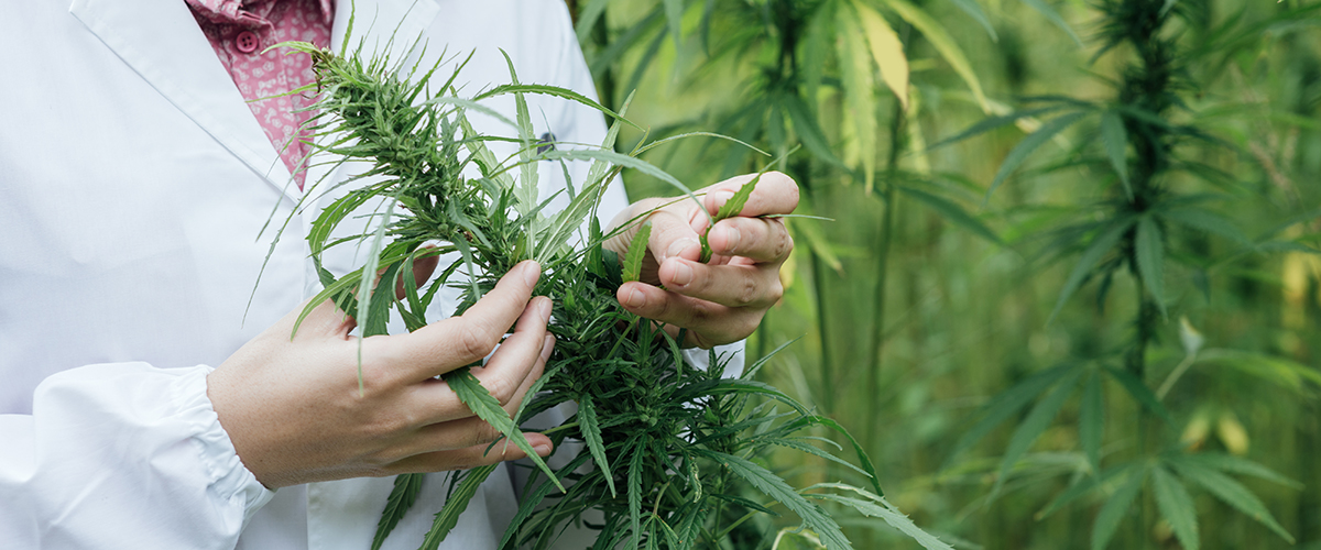DEA Releases Long-Awaited Rule Proposal Allowing More Marijuana Growers For Research